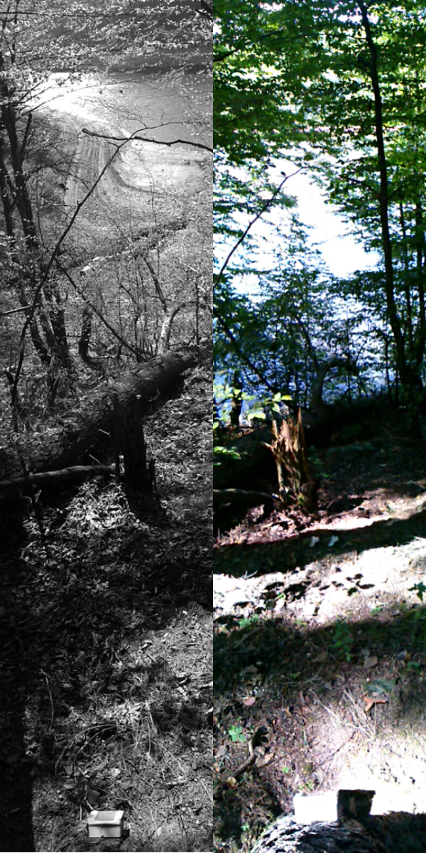 collage pinhole location 4